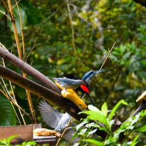 Aves · Turismo · Pacífico Colombiano · Ecoturismo · BePacific