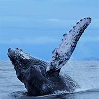 Ballenas · Turismo · Pacífico Colombiano · Ecoturismo · BePacific